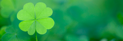 Green Fundraiser - St. Patrick's day